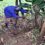 The Water Project: Maraba Community, Shisia Spring -  Planting Of Bananas