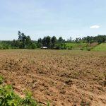 The Water Project: Musango Commnuity, Wabuti Spring -  Landscape