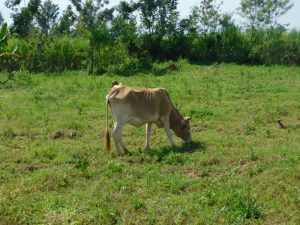 The Water Project:  Livestock Grazing