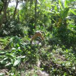 The Water Project: Litinye Community, Shivina Spring -  Drainage Opening