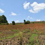 The Water Project: Imbiakalo Community, Askari Spring -  Landscape