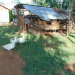 The Water Project: Indulusia Community, Osanya Spring -  Animal Pen