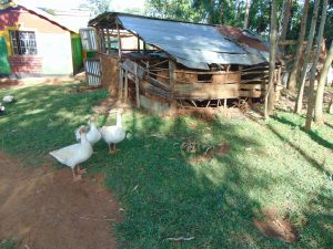 The Water Project:  Animal Pen