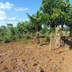 The Water Project: Indulusia Community, Osanya Spring -  Banana Farm