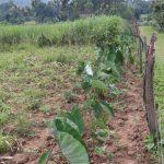 The Water Project: Makhwabuyu Community, Sayia Spring -  Mixed Farm Plot