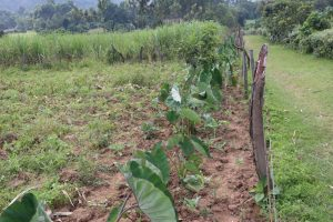 The Water Project:  Mixed Farm Plot