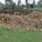 The Water Project: Mukhuyu Community, Gideon Kakai Chelagat Spring -  Animal Feed