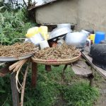 The Water Project: Mukhuyu Community, Gideon Kakai Chelagat Spring -  Millet Sundrying At The Dishrack