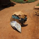 The Water Project: Mukhonje B Community, Peter Yakhama Spring -  Chicken Cage