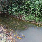 The Water Project: Lokomasama, Kalahire Junction -  Alternate Water Source