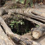 The Water Project: Lokomasama, Bofi Village -  Alternate Water Source