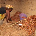 The Water Project: Lokomasama, Kalahire Junction -  Woman Removing Good Palm Karmel Seeds From The Bad Ones