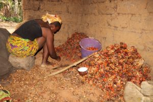 The Water Project:  Woman Removing Good Palm Karmel Seeds From The Bad Ones