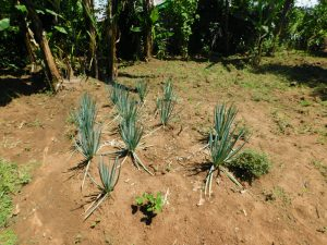 The Water Project:  Healthy Vegetable Corner