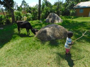 The Water Project:  Taking Care Of Papas Livestock