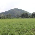The Water Project: Mukhuyu Community, Gideon Kakai Chelagat Spring -  Landscape
