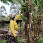 The Water Project: Handidi Community, Malezi Spring -  Checking On The Bananas