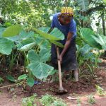 The Water Project: Luyeshe Community, Simwa Spring -  In Her Small Farm Working On Yams