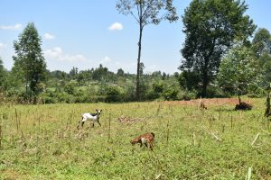 The Water Project:  Animals Grazing In Open Fields