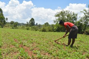 The Water Project:  Farming
