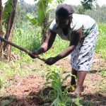 The Water Project: Ematetie Community, Weku Spring -  Weeding Her Maize Farm