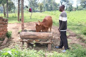 The Water Project:  Watching Over His Cow As It Eats