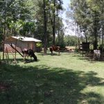 The Water Project: Elwichi Community, Mulunda Spring -  Cows Grazing At Doras House