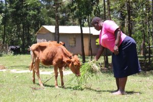 The Water Project:  Feeding Her Calf