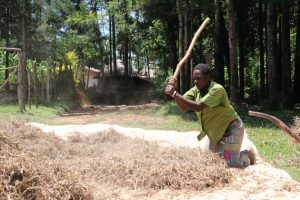 The Water Project:  Miss Ruth Beating Bean Pods To Harvest Beans