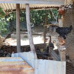 The Water Project: Elwichi Community, Mulunda Spring -  Poutlry Enclosure At Doras Home