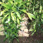The Water Project: Kalenda A Community, Moro Spring -  Stone Floor Inside Bathing Area