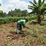 The Water Project: Shihome Community, Oloo Njinuli Spring -  Tilling Her Farm