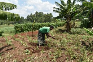 The Water Project:  Tilling Her Farm