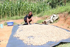 The Water Project:  Spreading Groundnuts Out To Dry