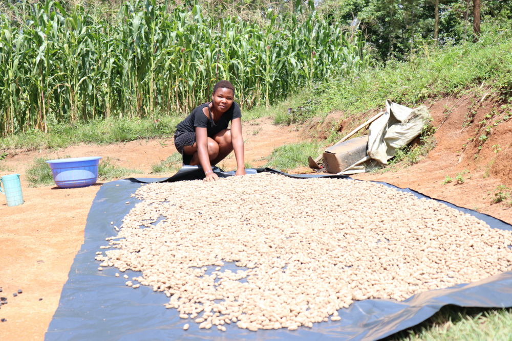 The Water Project : covid19-kenya19117-spreading-groundnuts-out-to-dry