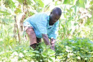 The Water Project:  Weeding His Potato Farm