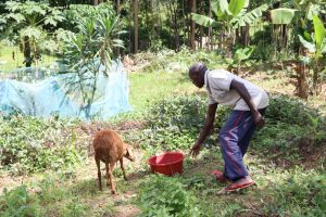 The Water Project:  Feeding His Sheep Water