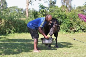 The Water Project:  Giving His Cow A Drink From The Spring