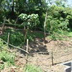 The Water Project: Maraba Community, Nambwaya Spring -  Completed Fence