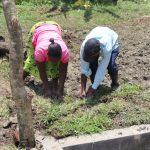 The Water Project: Lukala C Community, Livaha Spring -  Grass Planting