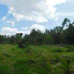 The Water Project: Muyundi Community, Magana Spring -  Community Landscape