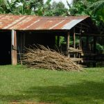 The Water Project: Muyundi Community, Magana Spring -  Cowshed