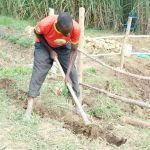The Water Project: Emusaka Community, Muluinga Spring -  Digging A Diversion Channel