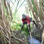The Water Project: Musango Commnuity, Wabuti Spring -  Digging The Drainage Channel