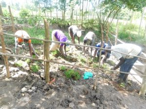 The Water Project:  Planting Grass In The Catchment Area