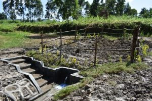 The Water Project:  Grass And Live Fence Planted Above Catchment Area