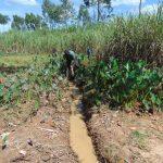 The Water Project: Mahira Community, Mukalama Spring -  Drainage Opening