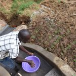The Water Project: Maraba Community, Shisia Spring -  Watering Freshly Planted Grass