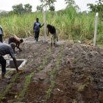 The Water Project: Makhwabuyu Community, Sayia Spring -  Planting Grass