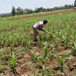The Water Project: Emusaka Community, Manasses Spring -  Farming